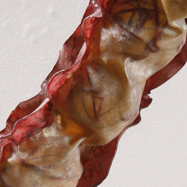 Ovary, detail