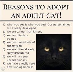 adult+cat.jpg