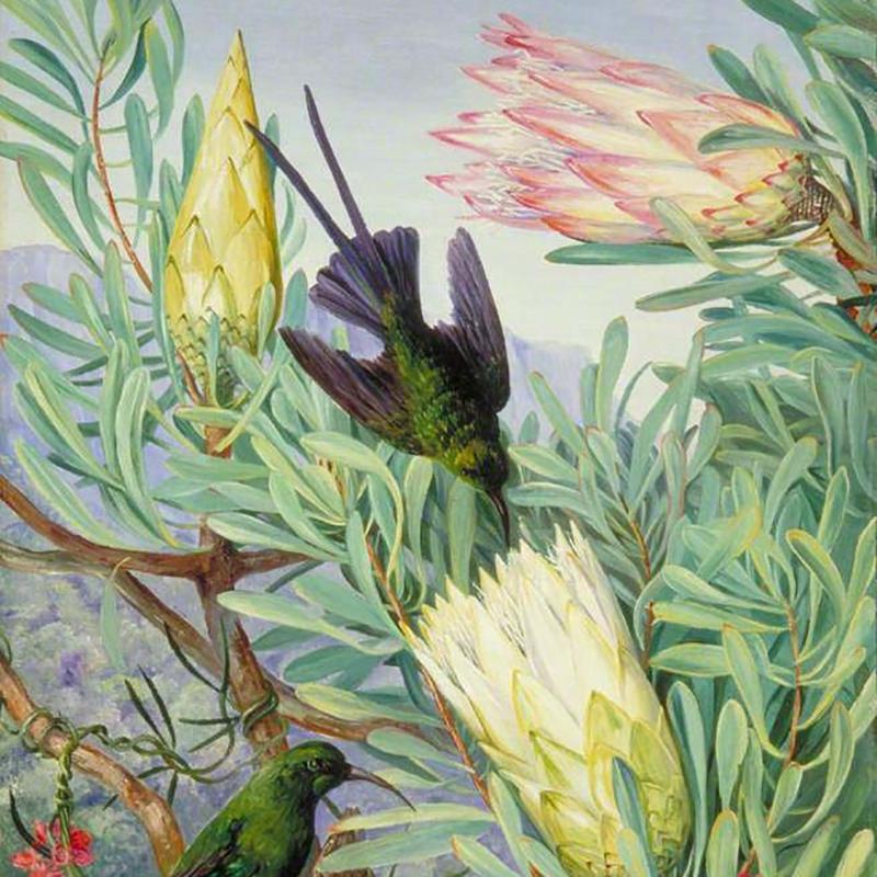 protea painting1.jpg