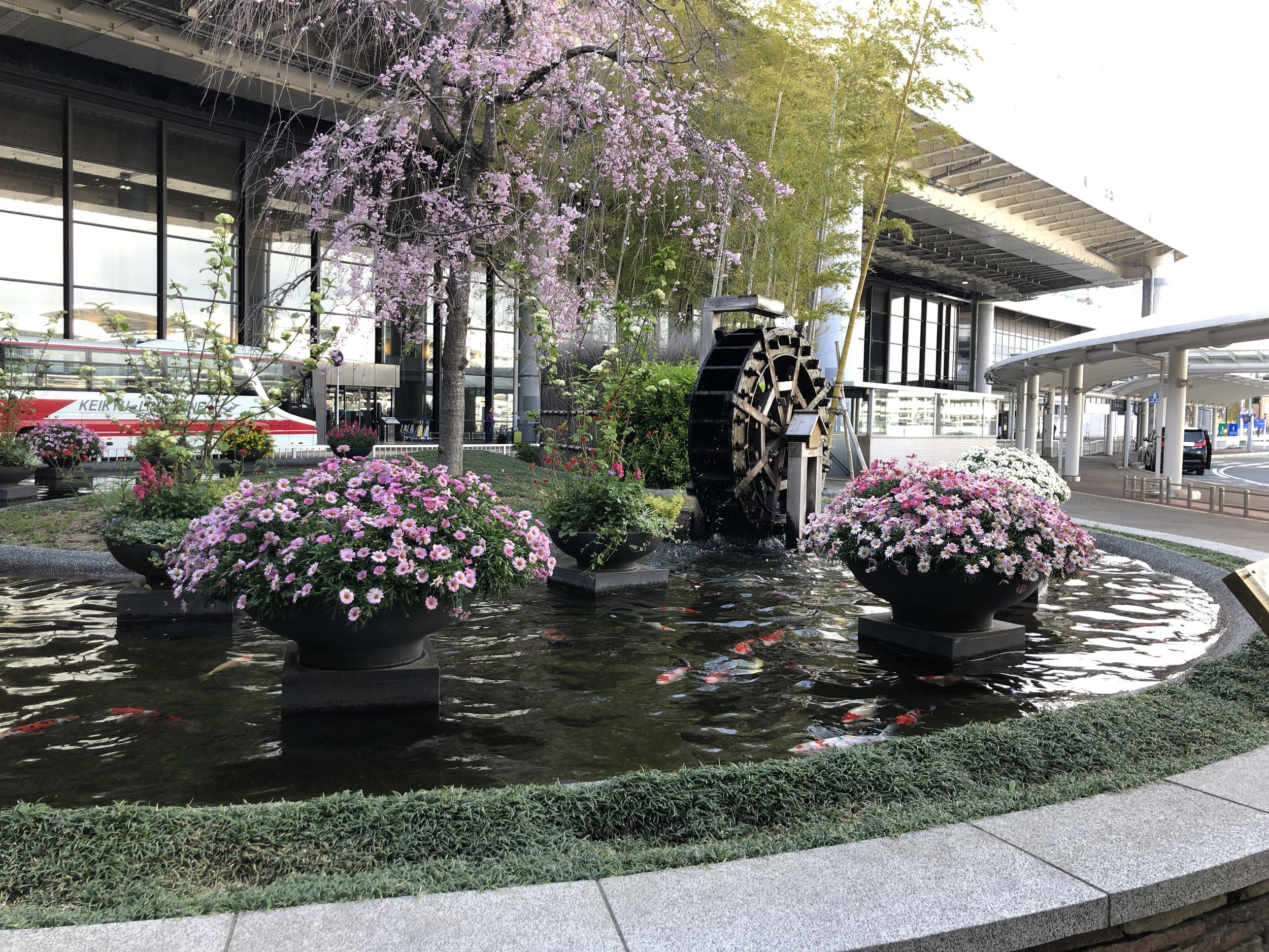 Japan is so beautiful in the Spring. Even directly outside their airport, Koi Ponds are scattered around & you can see the Cherry Blossoms are still in bloom! This is going to make for some exciting pictures this week!