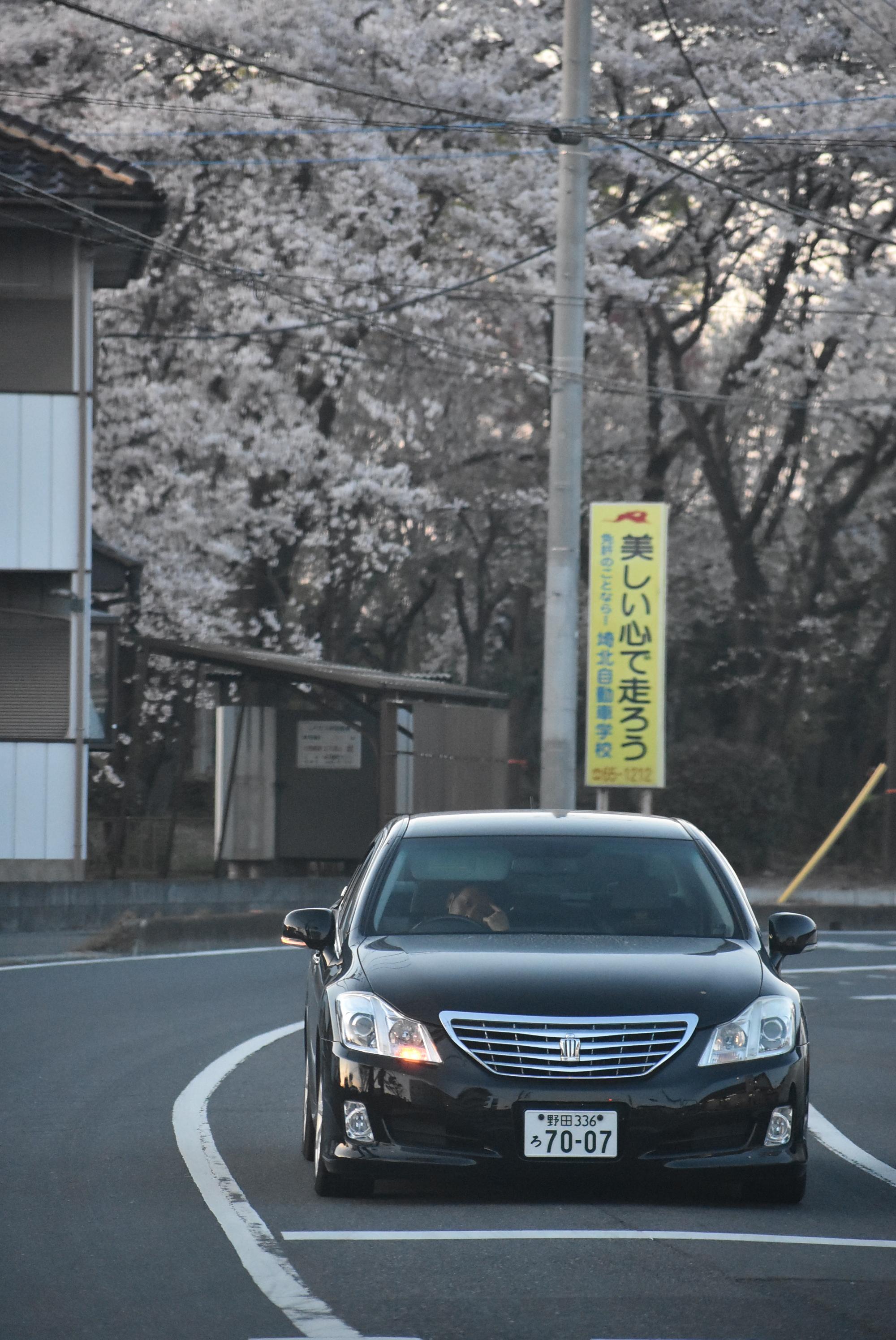 Cherry Blossom Crown.