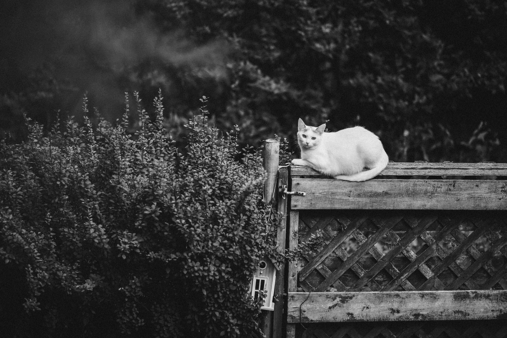 2019_Rothbauerstudio_personalwork_ottawa_petphotography_cat.jpg
