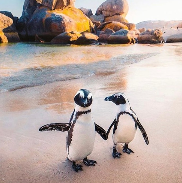 Penguin colony at Boulders Beach, in Simon's Town
