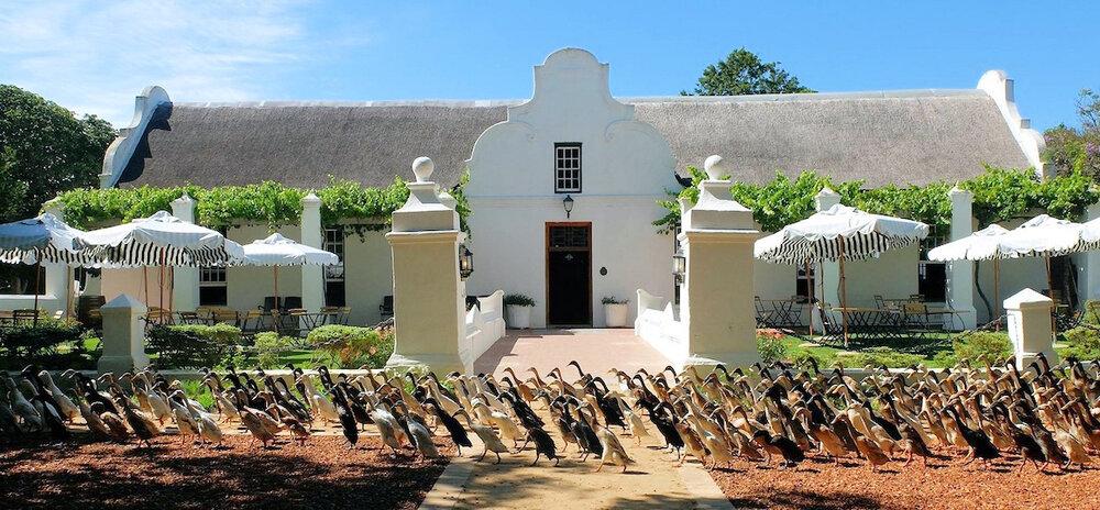 Amazing Cape Town Tours Blog 3 vergenoegd.jpg