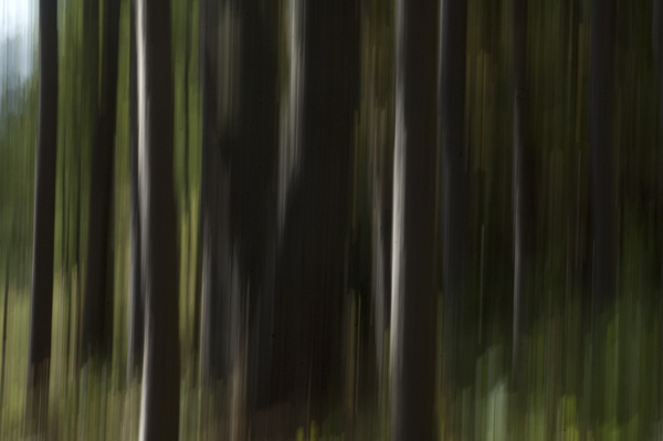 abstract forest 1.jpg