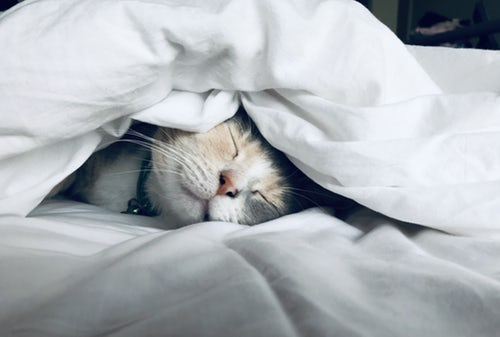 GoodNightSleep.jpg