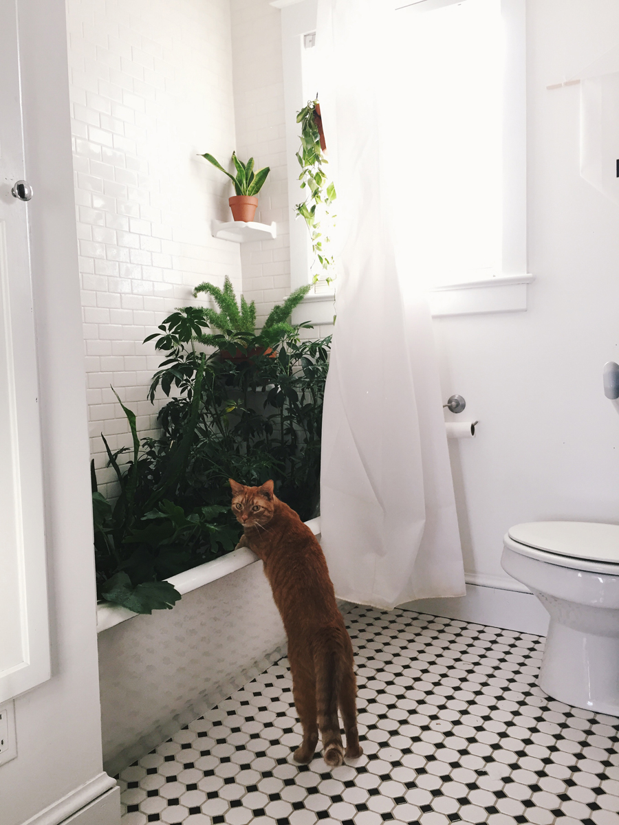 brookecourtney_showeryourplants-9.jpg
