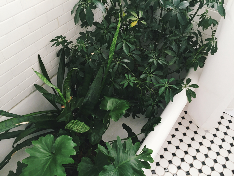 brookecourtney_showeryourplants-3.jpg