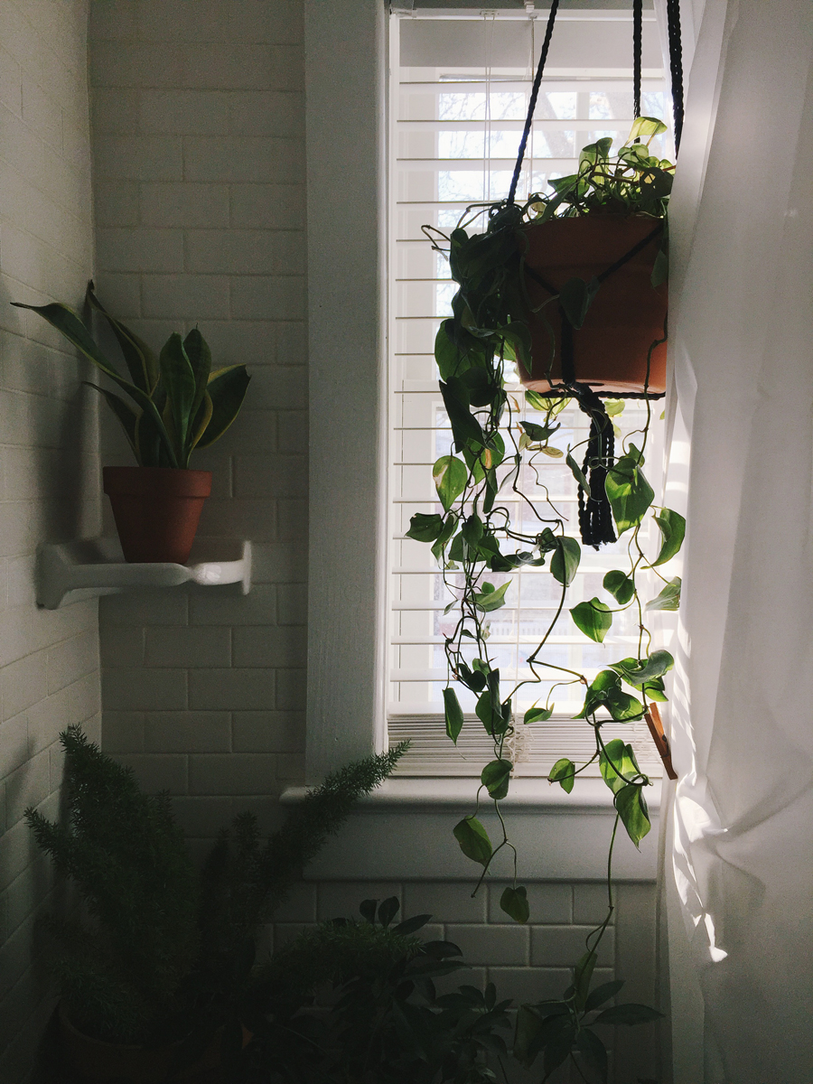 brookecourtney_showeryourplants-4.jpg