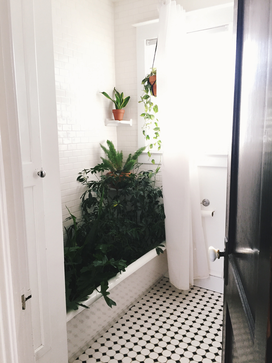 brookecourtney_showeryourplants-1.jpg