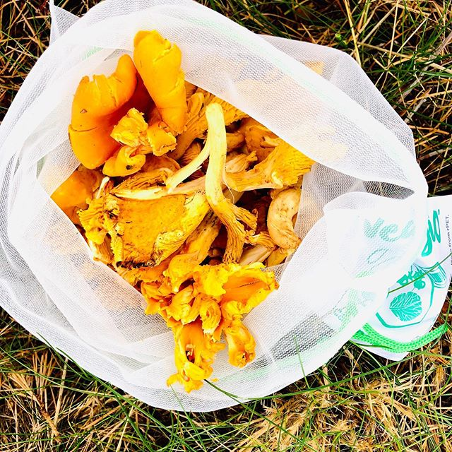This is the time to enjoy the chanterelles. What is your favourite recipe? Have a golden weekend!  #chanterelle #kantarell #reuse #naturalfood #resublebags #netbags #veggio #reusables