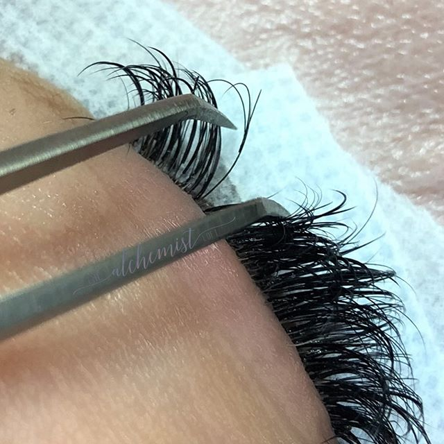Pretty little volume fan grow out.   Lash extensions are placed with:  Complete 𝐈 𝐒 𝐎 𝐋 𝐀 𝐓 𝐈 𝐎 𝐍  Proper 𝗪 𝐄 𝐈 𝐆 𝐇 𝐓  Highest quality 𝐏 𝐑 𝐎 𝐃 𝐔 𝐂 𝐓 𝐒  Seeing grow out like this checks all 𝐭𝐡𝐫𝐞𝐞.   Check out how perfect that curl is on that little volume fan. Just as curly today as it was the day it was placed.   I only use the best of the best for your lash line. That's all @ebllashes everything.