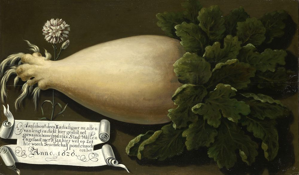 Image:  A Giant Radish,  anonymous, 1626, Rijksmuseum. Used with permission.