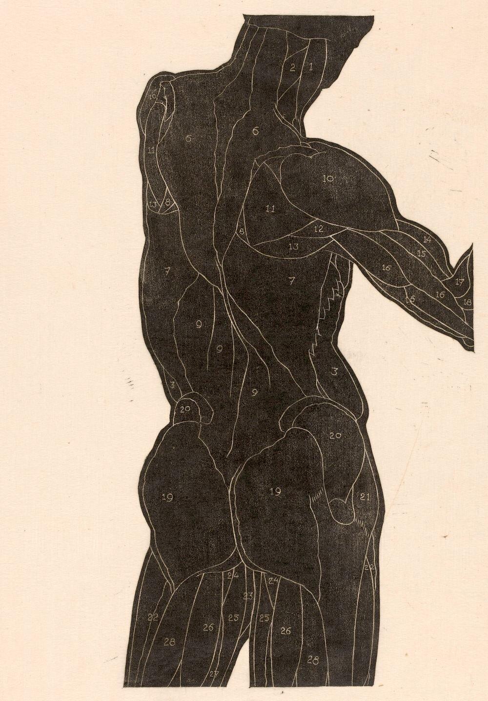Above: NOT a guy from my gym.  Image:  Anatomische studie van de rug- en bilspieren van een man in silhouet, Reijer Stolk, 1906 - 1945 , Rijksmuseum. Used with permission.