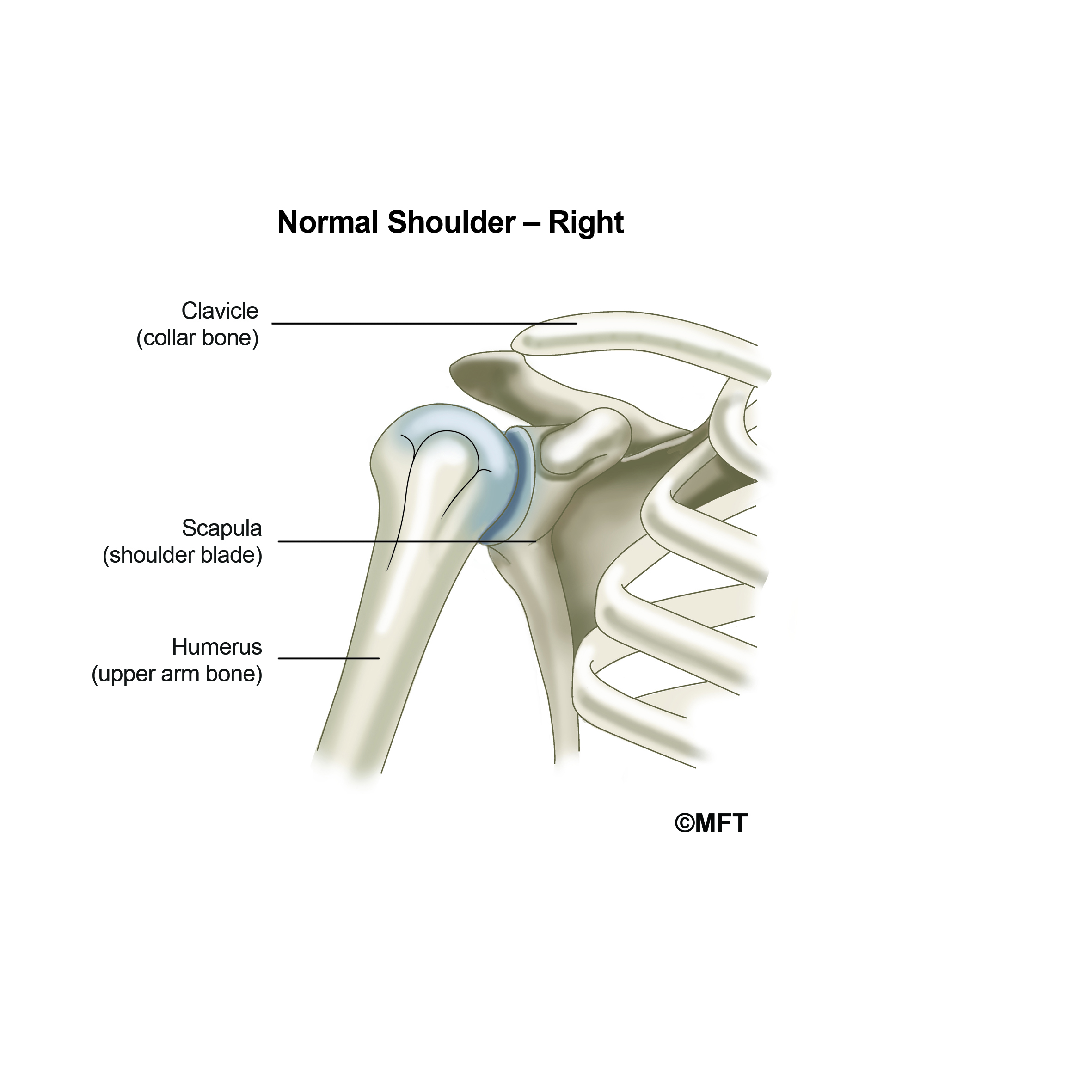 Normal Shoulder _ Right 01.jpg