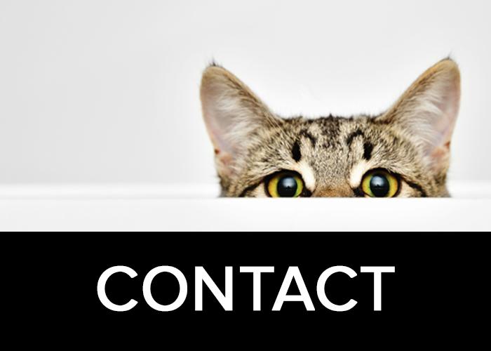 contact-box.jpg