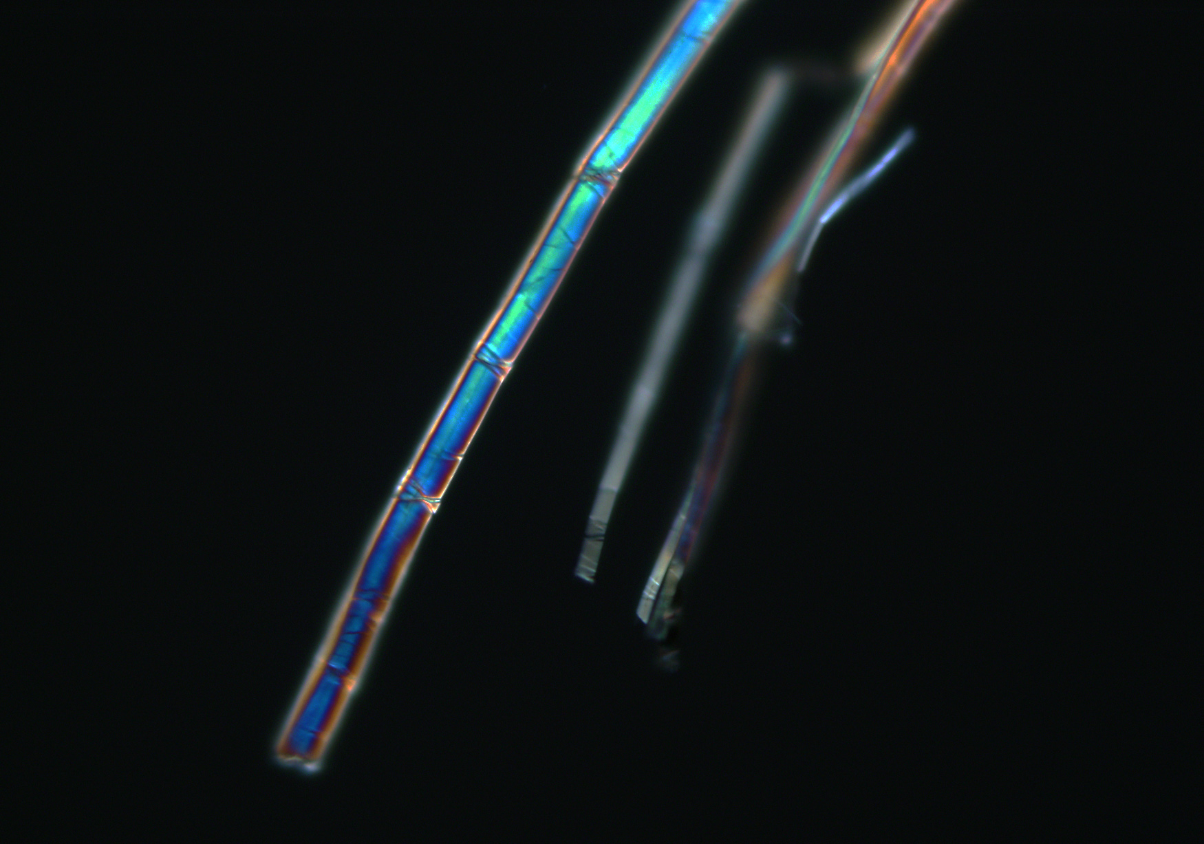 flax fibers - polarized light - 20x