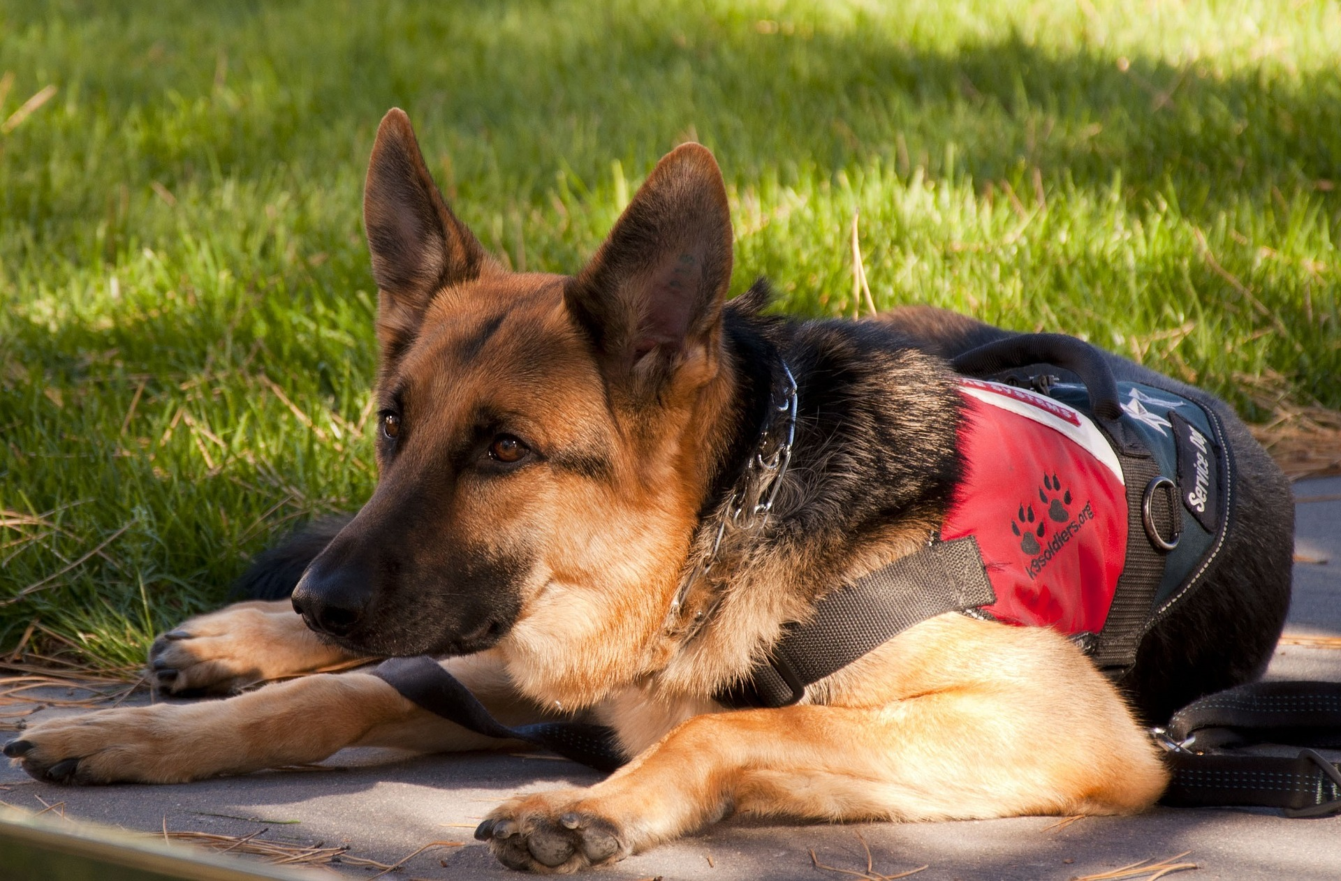 Working and Service Animals - What to do if your working dog dies…