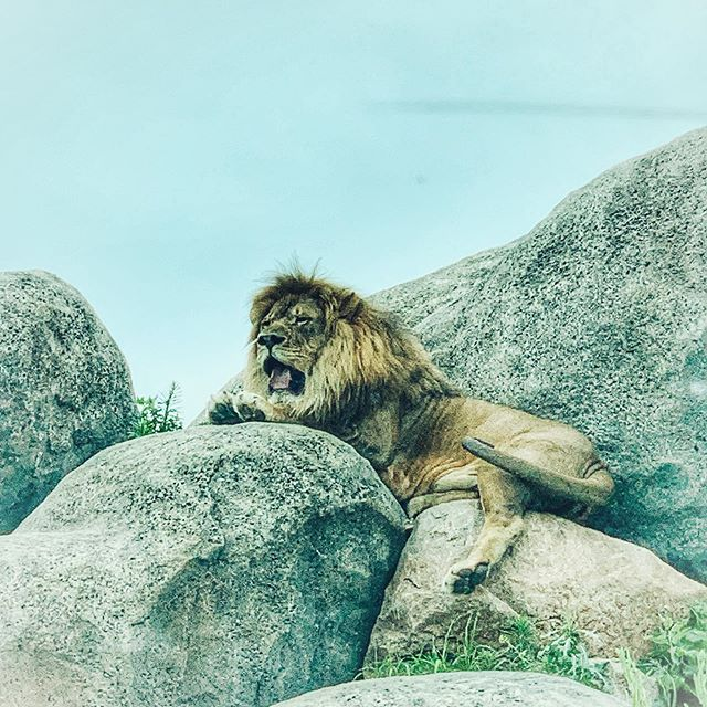 """""""Intelligence entails a strong mind, but genius entails a heart of a lion in tune with a strong mind."""""""