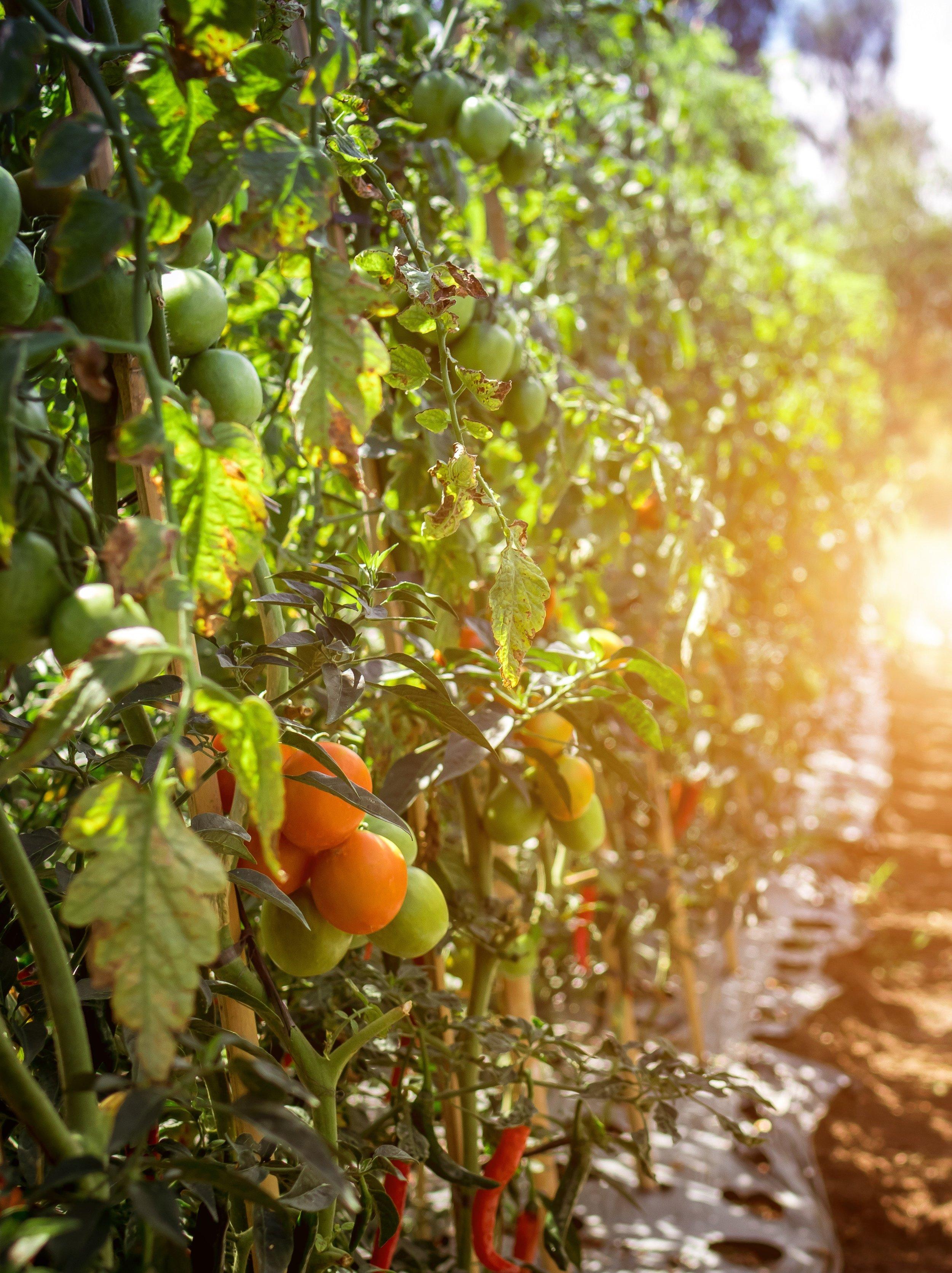 orange-lime-1.jpg