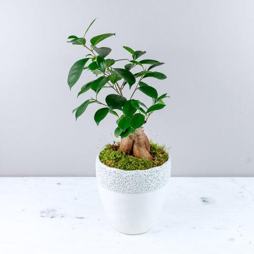 Winter Collection Menlo Botanica