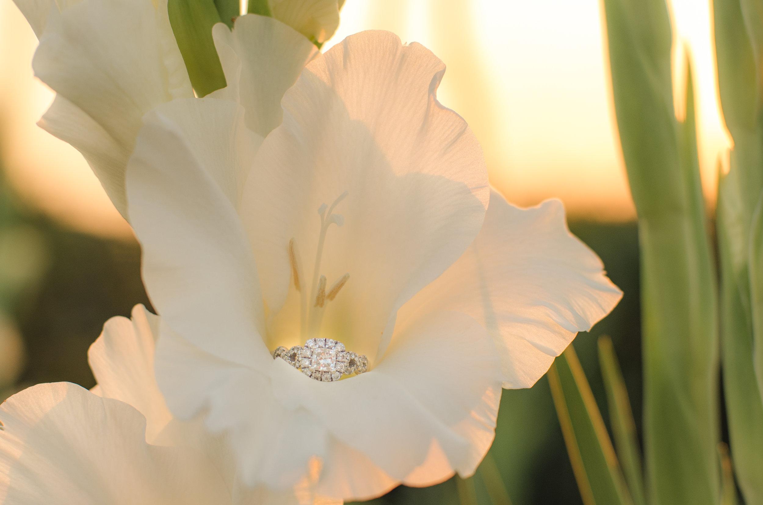 White flower holding engagement ring at sunset