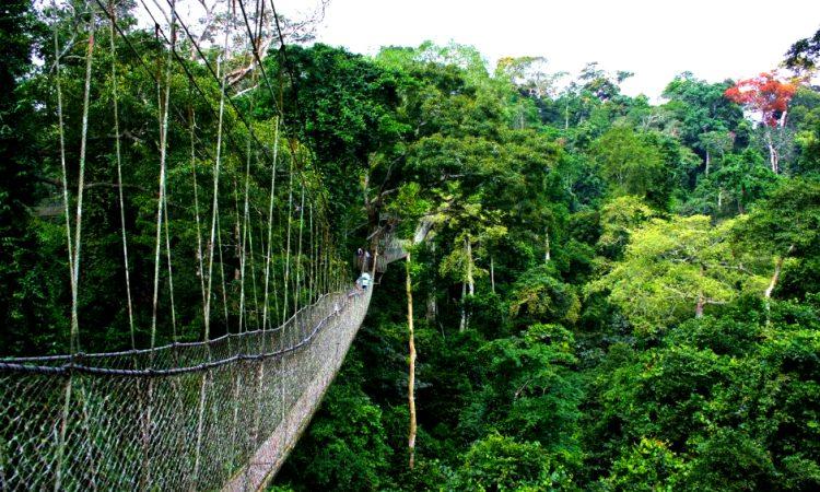 Nyungwe-forest-750x450.jpg