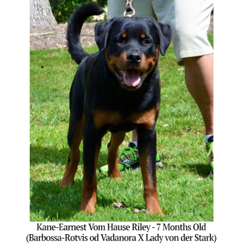 Kane-Earnest Vom Hause Riley - 7 Months Old