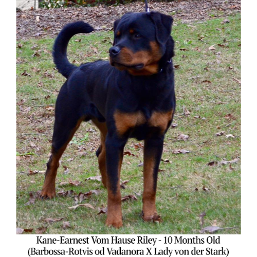 Kane-Earnest Vom Hause Riley - 10 Months Old