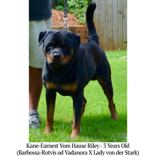 Kane-Earnest Vom Hause Riley - 3 Years Old