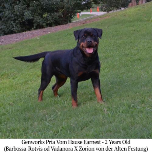 Genworks Pria Vom Hause Earnest - 2 Years Old