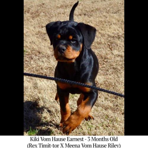 Kiki Vom Hause Earnest - 3 Months Old