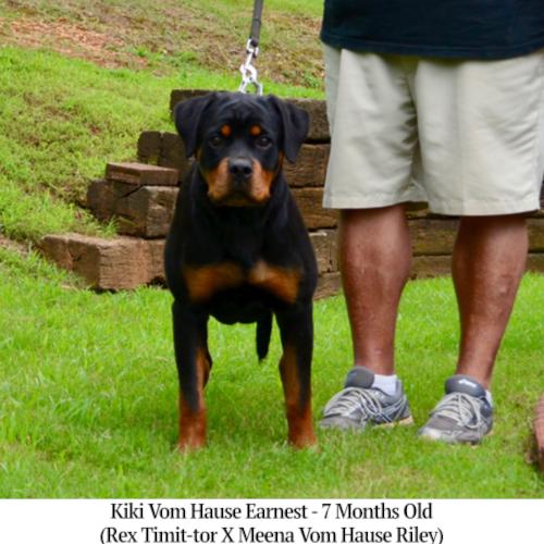 Kiki Vom Hause Earnest - 7 Months Old