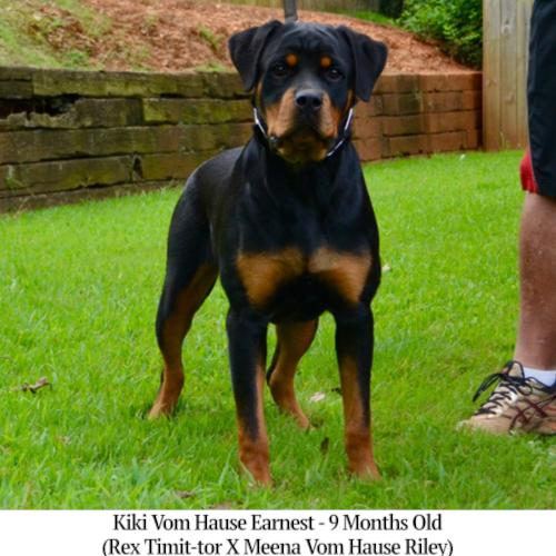 Kiki Vom Hause Earnest - 9 Months Old