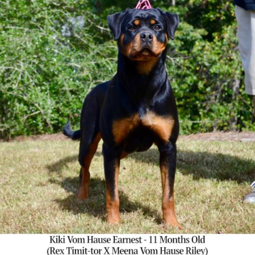 Kiki Vom Hause Earnest - 11 Months Old