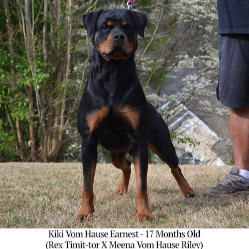 Kiki Vom Hause Earnest - 17 Months Old