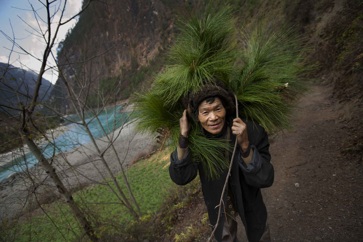 Wuli, Yunnan. A Tibetan man gathers pine needles for Buddhist rituals. While many Tibetans in this region have converted to Christianity they still maintain some of their traditional culture. The pines needles are put around Buddhist shrines and decorate the entry way to their homes.