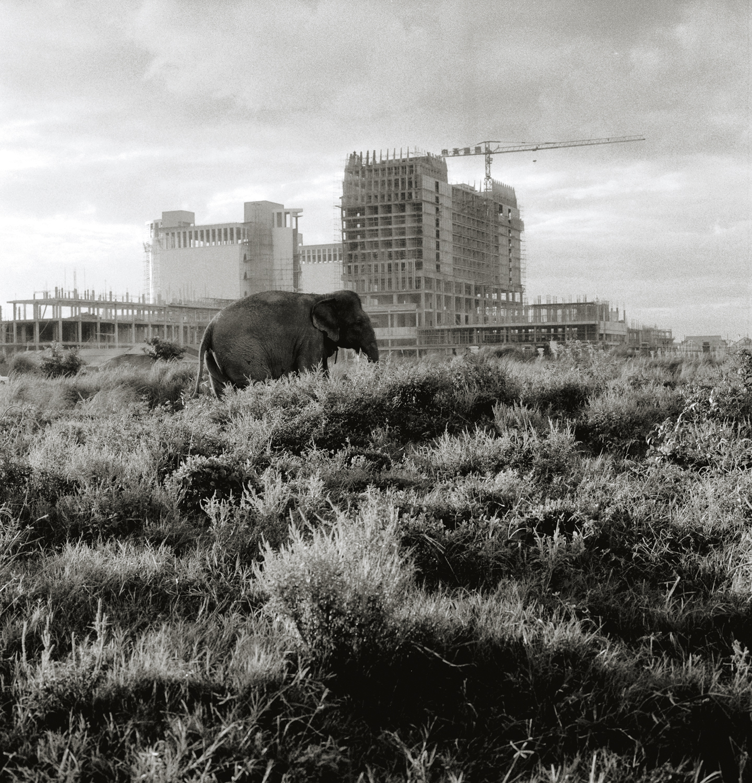 elephant in PP.jpg