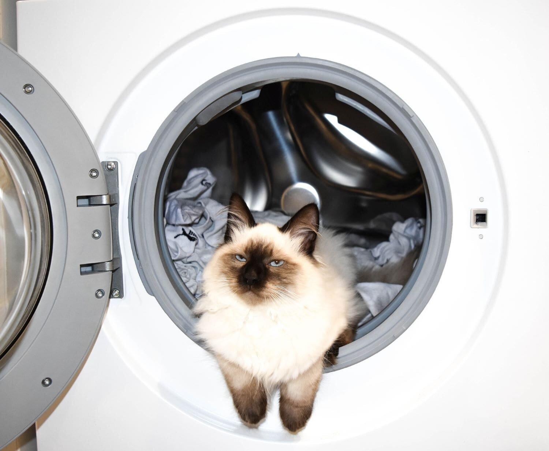 Siamese cat lounging in open washing machine.