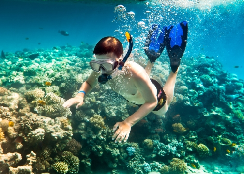 Snorkeler among the coral of the Red Sea