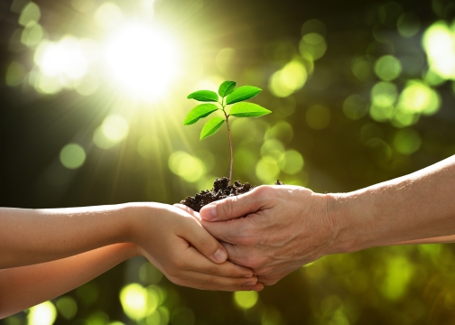 Tender plant being handed to another person