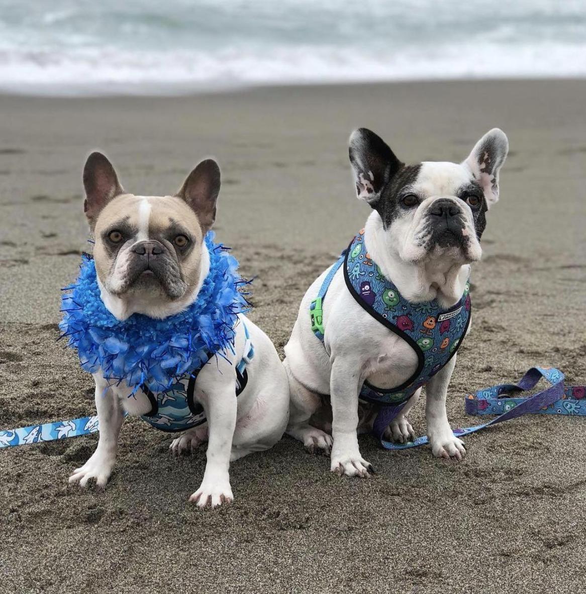 Cherie with her bro ace Photo credit: @cheriethesurfdog