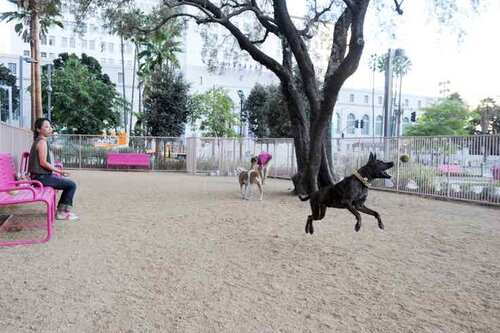 Best Dog Parks In La Woof Republic