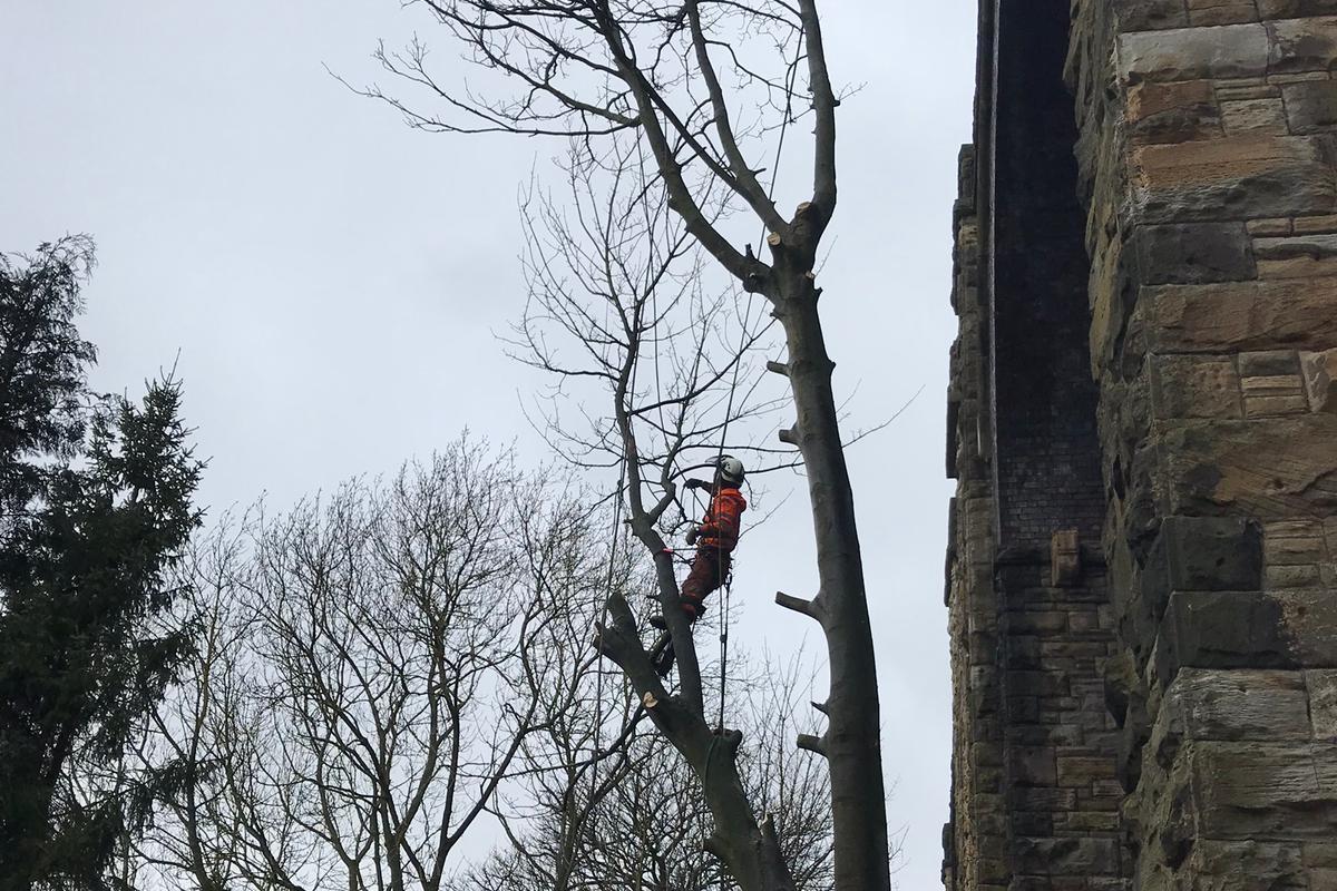 Tree Surgery  - Arborist Tree Dismantle