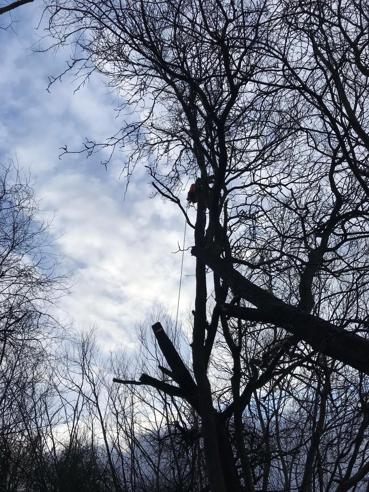 Arborist Tree Removal - Railway