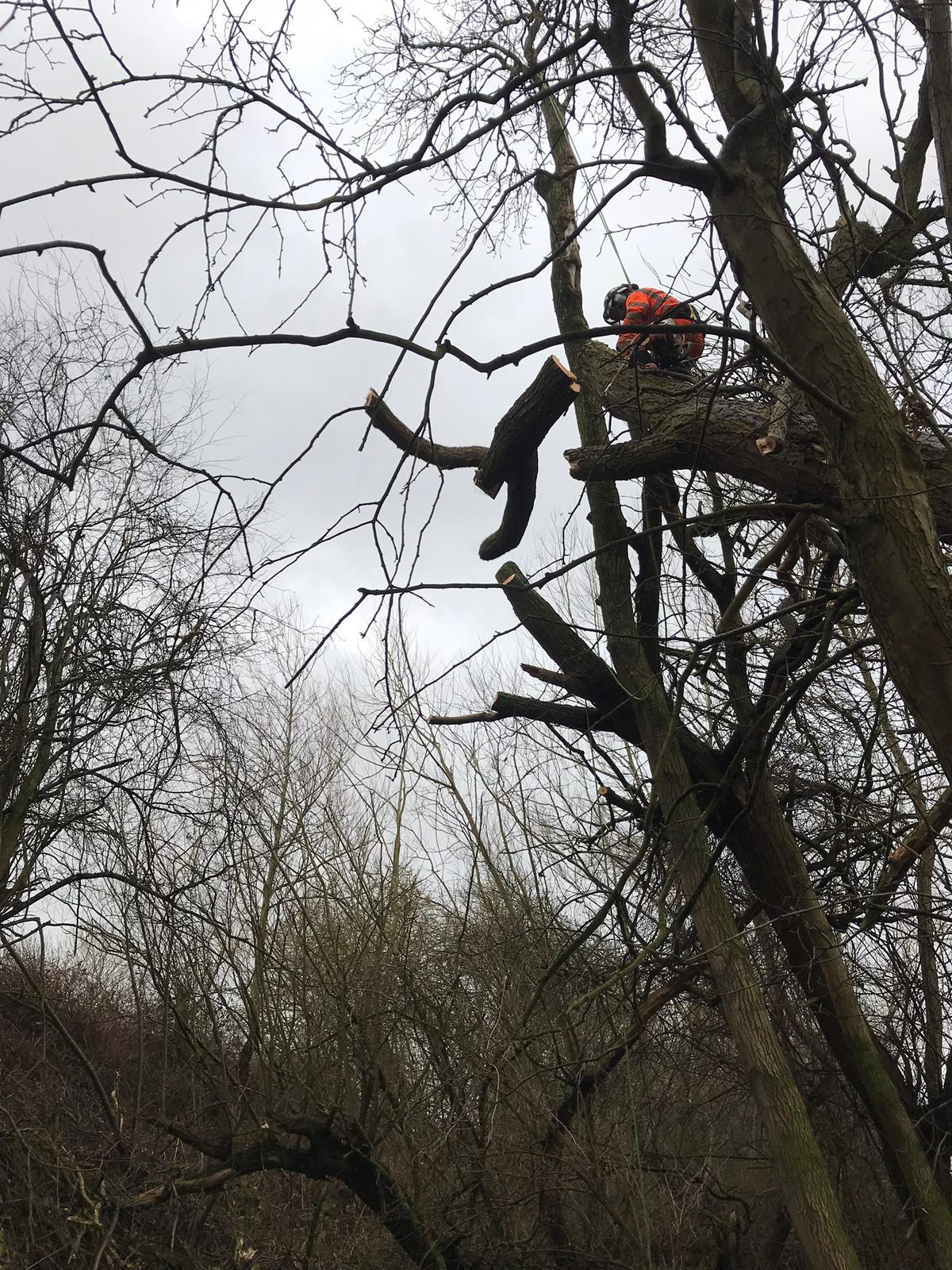 Arborist Branch Removal