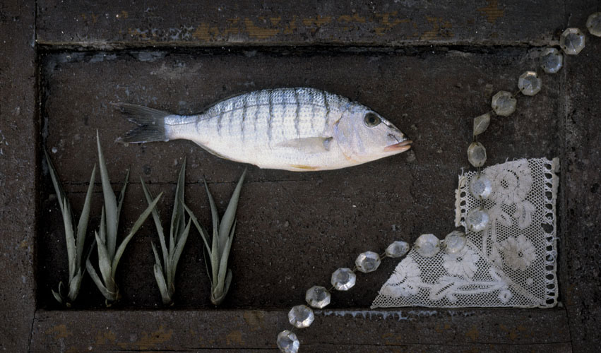 fisk11s-copy.jpg