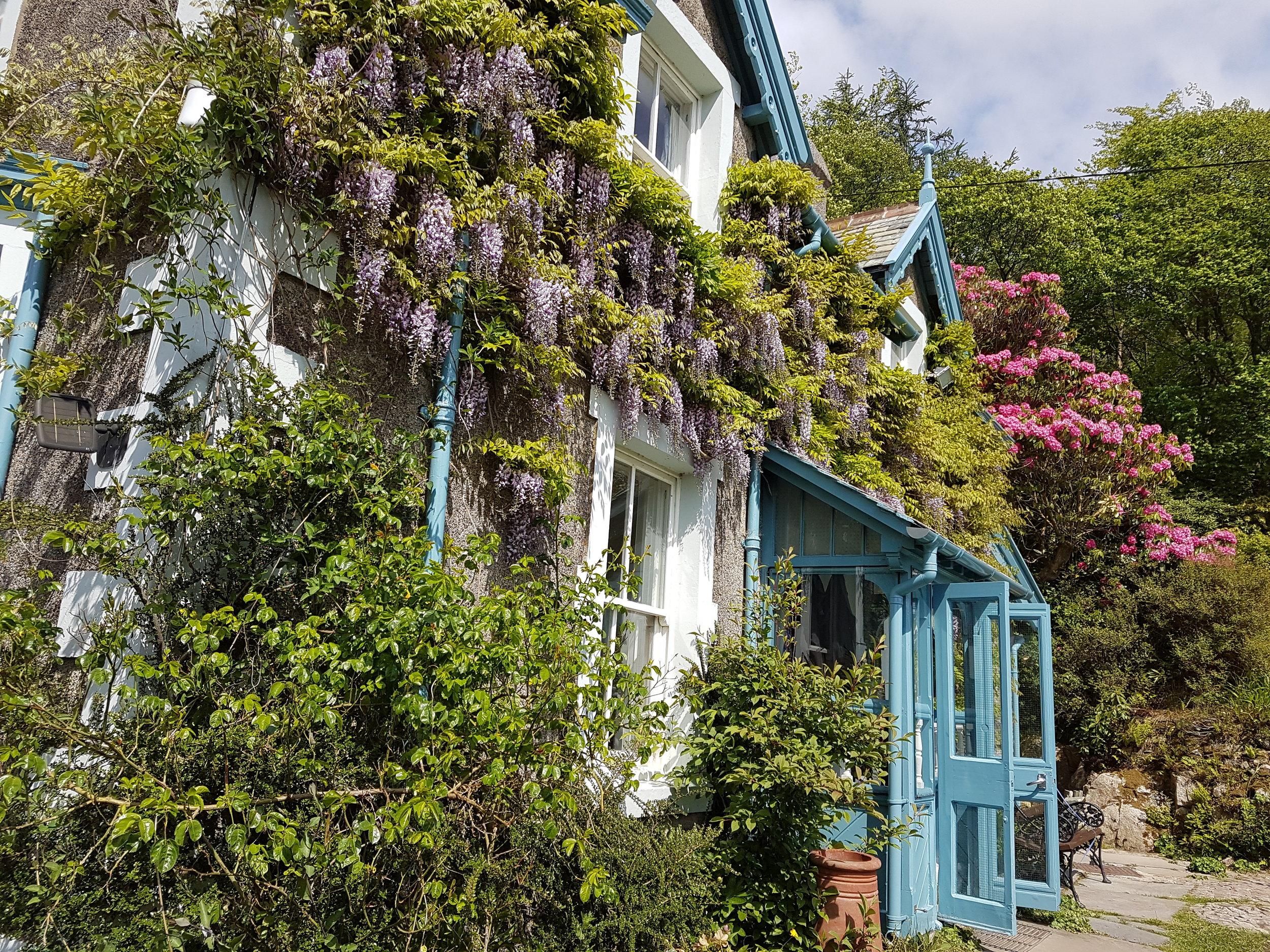 Rockwood wisteria.jpg