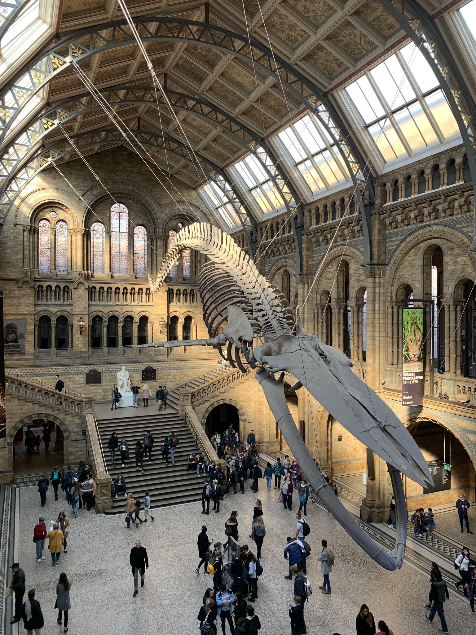 A whale skeleton in the main hall