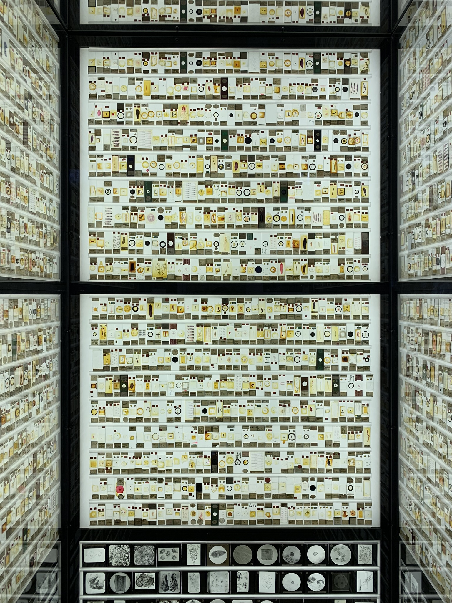 Thousands of microscope slides of tiny animals